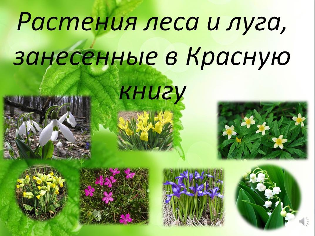 Картинки по запросу мероприятие первоцветы
